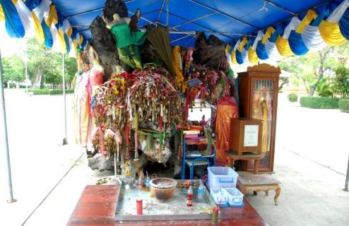 ต้นตะเคียนยักษ์ วัดบ้านกร่าง จ.สุพรรณบุรี